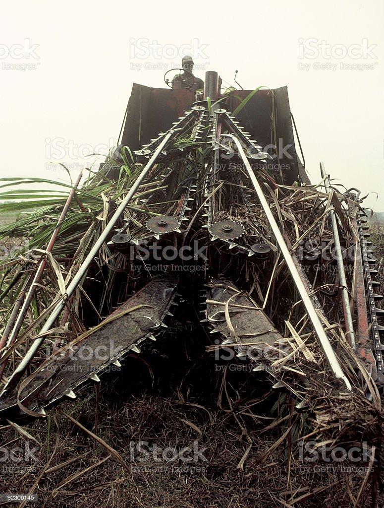Sugar Cane Cutter stock photo