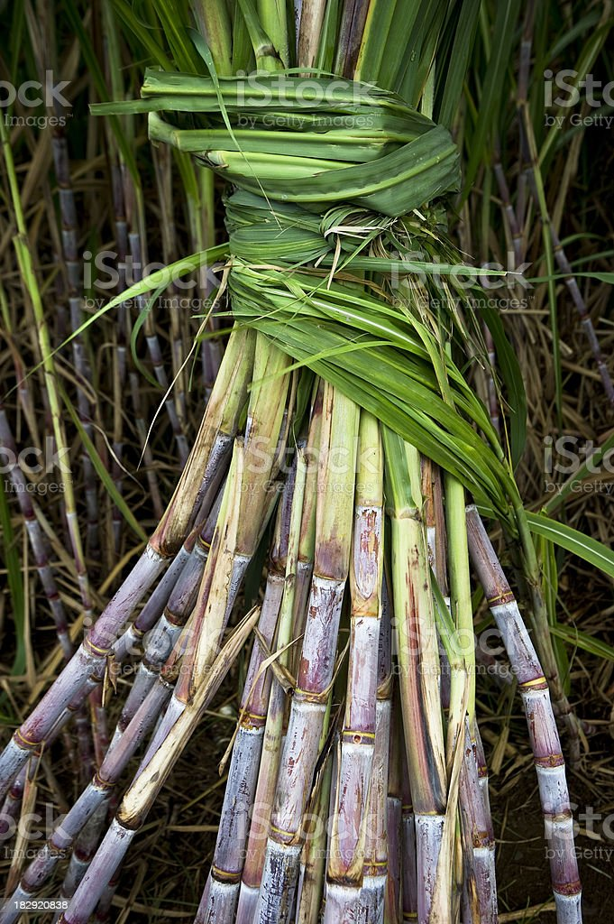 Sugar Cane Field details royalty-free stock photo