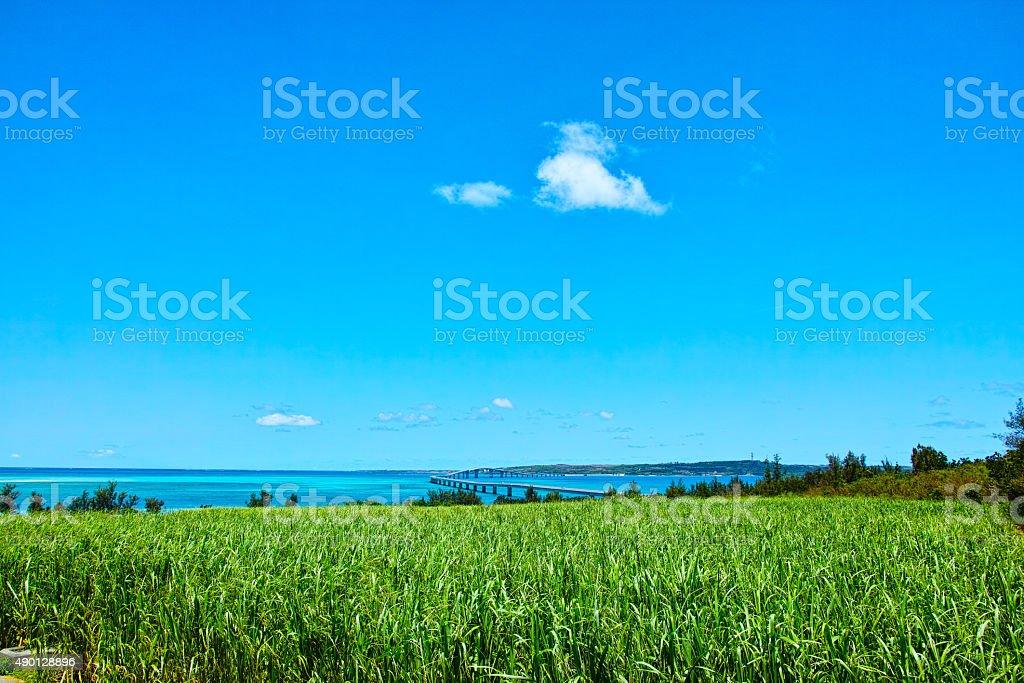 Sugar cane fields and Irabu Bridge stock photo