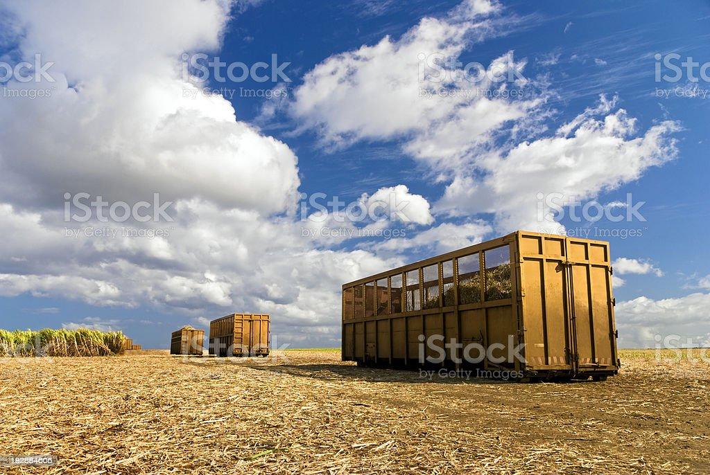 Sugar Cane Harvest 3 stock photo
