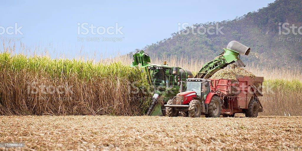 Sugar cane harvest stock photo