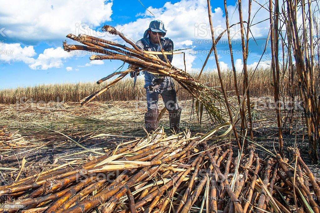 Sugar Cane Harvester stock photo