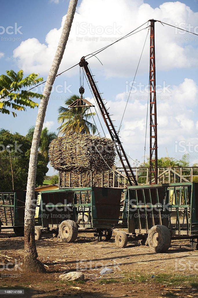 Sugar Cane Harvesting stock photo