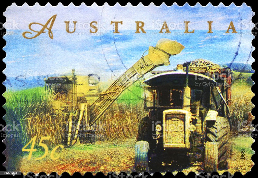 Sugar Cane Harvesting royalty-free stock photo