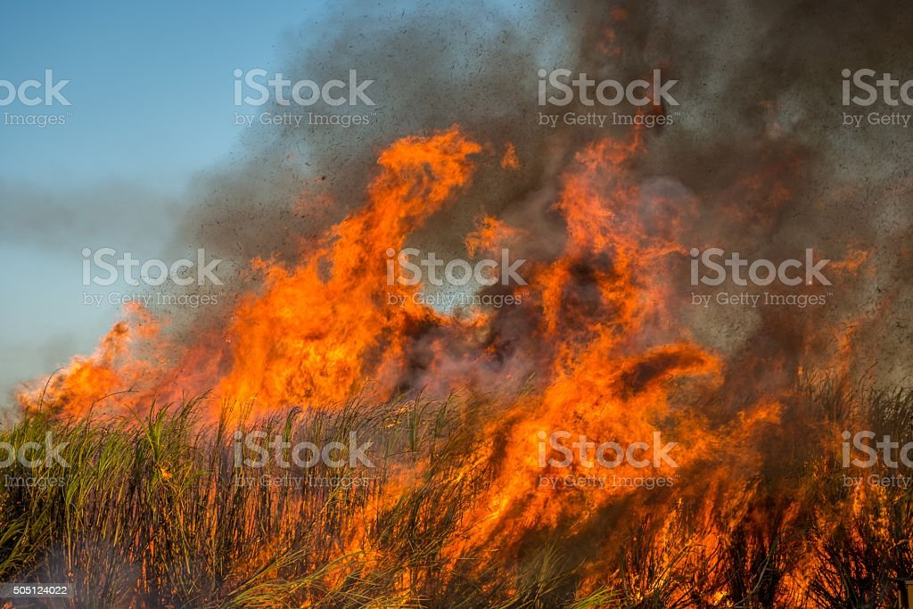 Sugar Cane in Flames, Cairns, Australia stock photo