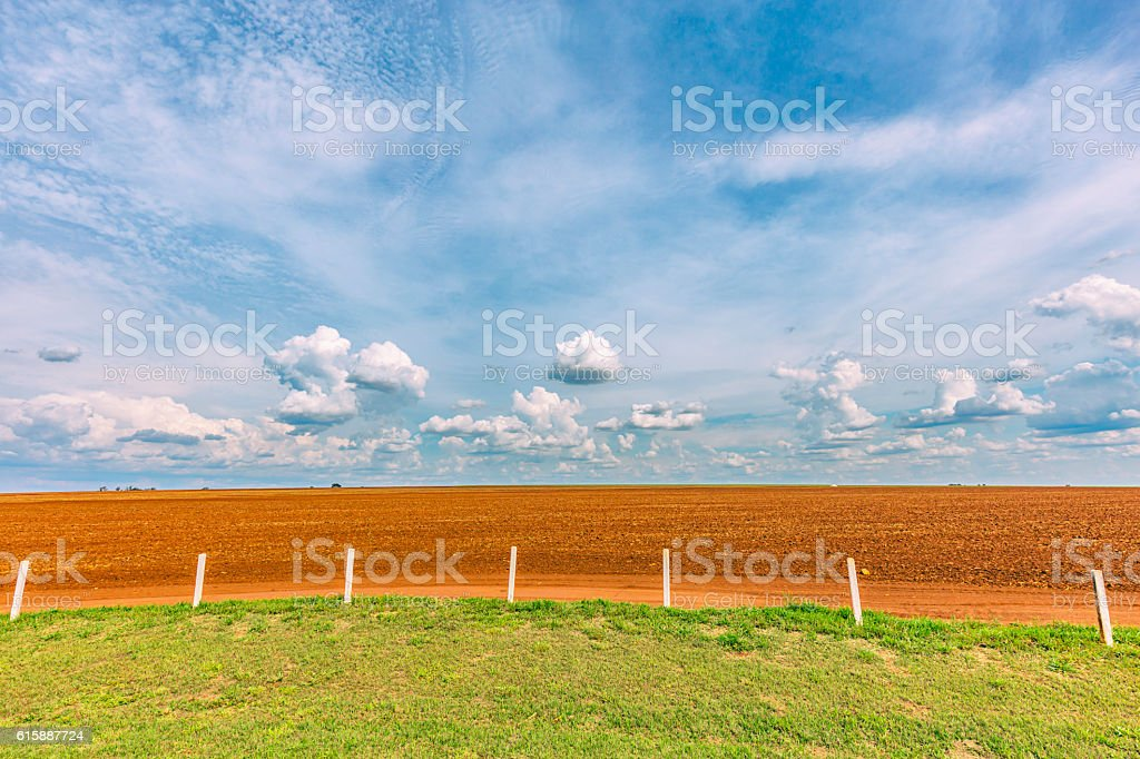 Sugar cane plantation and cloudy sky - Brazil coutryside stock photo