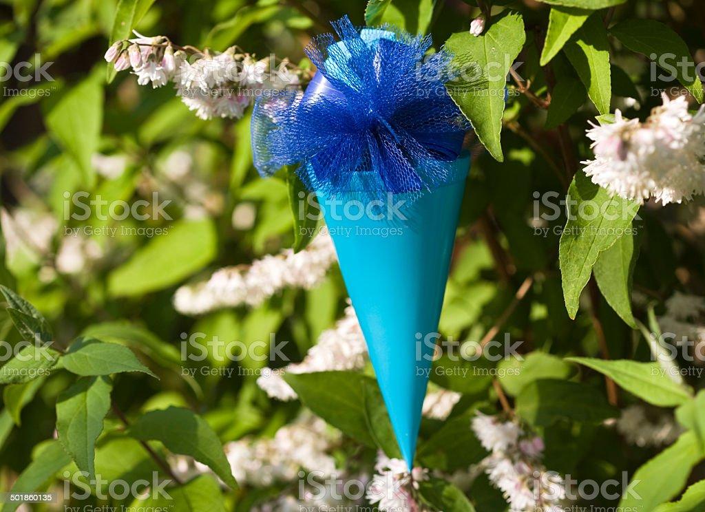 Sugar cone tree stock photo