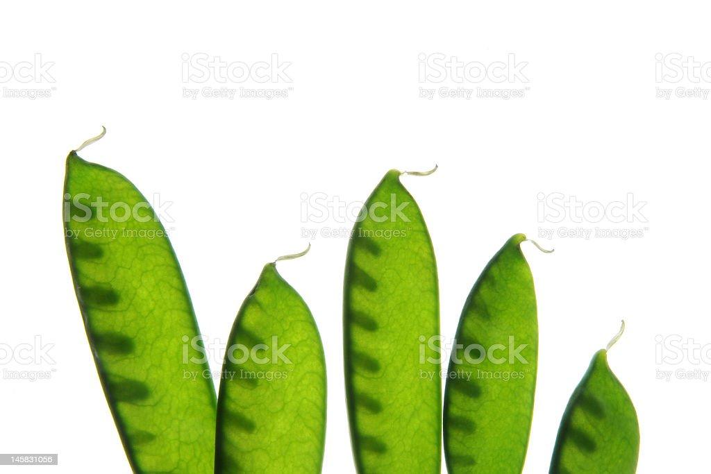 sugar peas,  Zuckererbse royalty-free stock photo