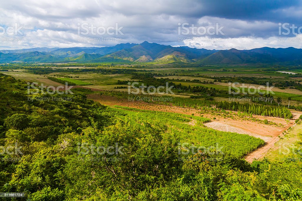 Sugar Plantations in the Caribbean stock photo