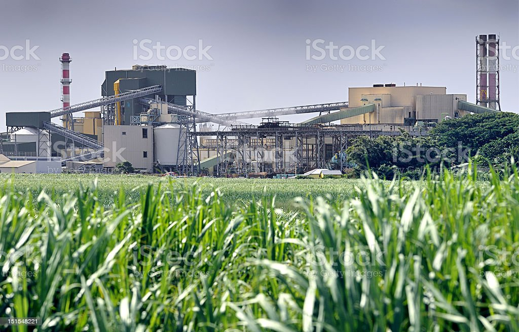 Sugar refinery and sugarcane stock photo