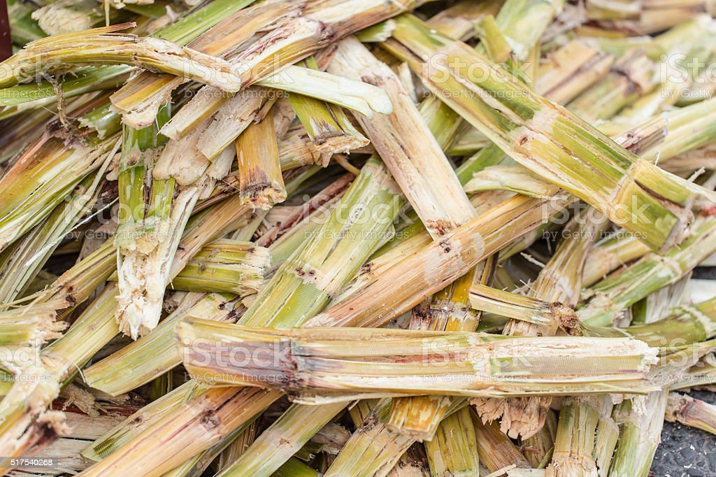 Sugarcane bagasse. stock photo