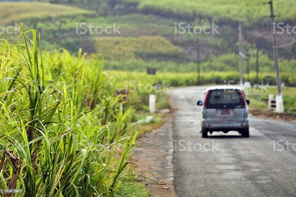 sugarcane fields stock photo