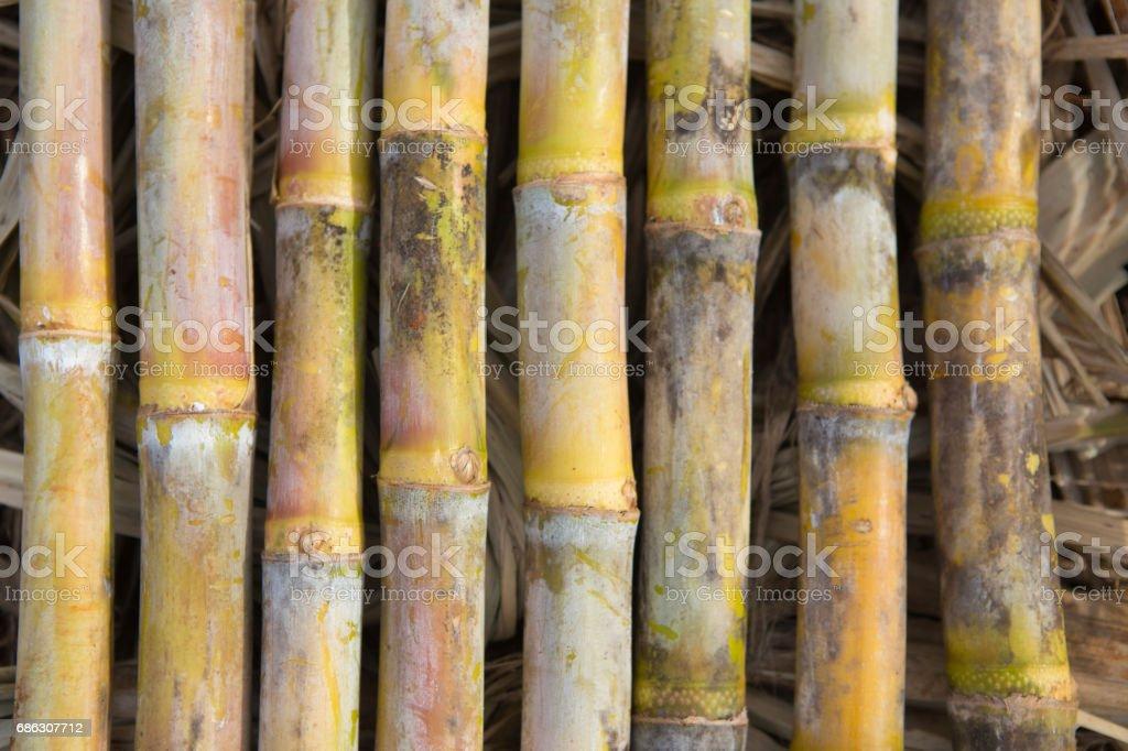 8 sugarcane stock photo