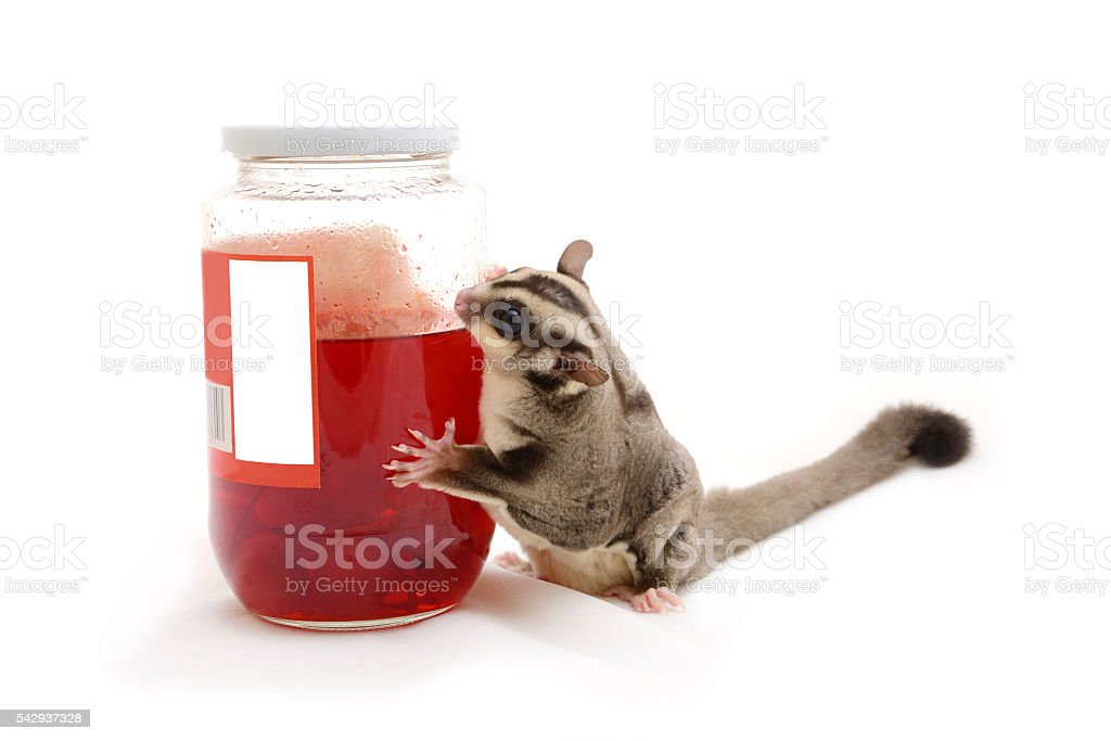 Sugarglider with red cherry in bottle. stock photo