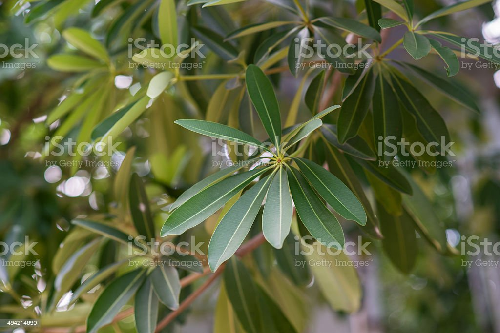 Suicide Leaves In The park stock photo