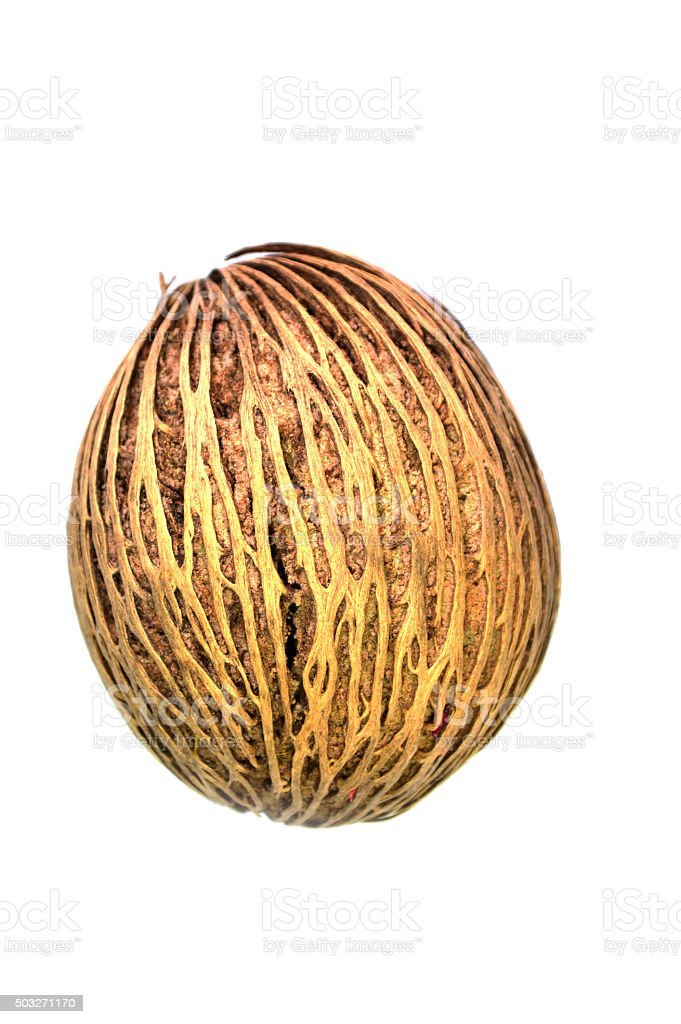 Suicide tree seed or cerbera odollam seed on white background stock photo
