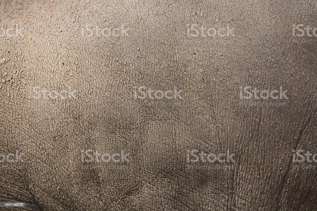 Sulawesi babirusa (Babyrousa celebensis) skin texture. stock photo