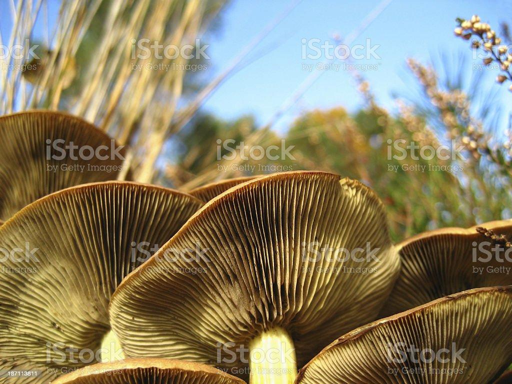sulphur tuft stock photo