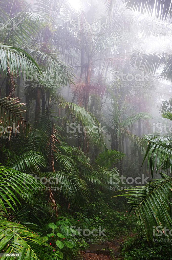 A sultry wet El Yunque Rain Forest in Puerto Rico stock photo