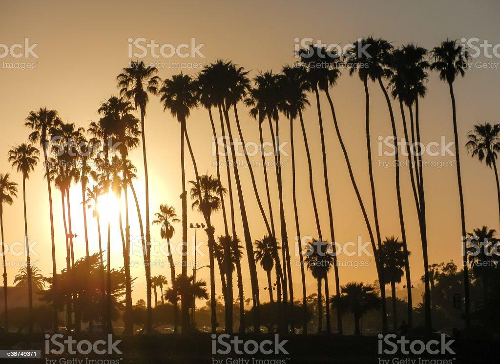 Sum beaming through palm trees in Orange Santa Barbara sky. stock photo
