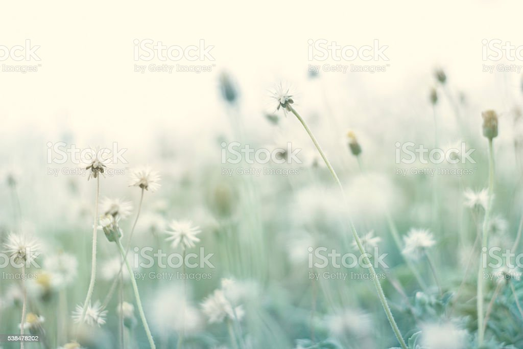 Summer abstract pastel color nature background with dry flower stock photo