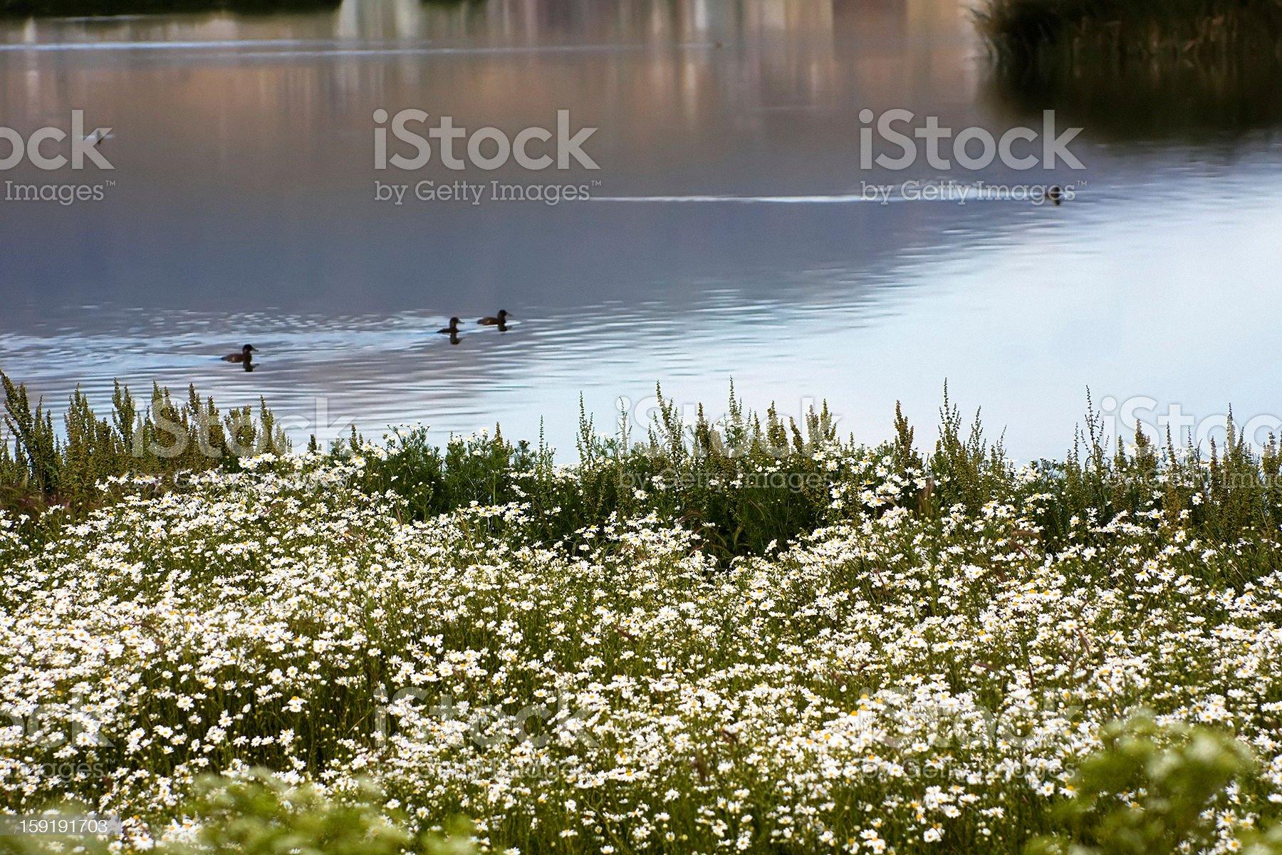 Summer at the lake royalty-free stock photo