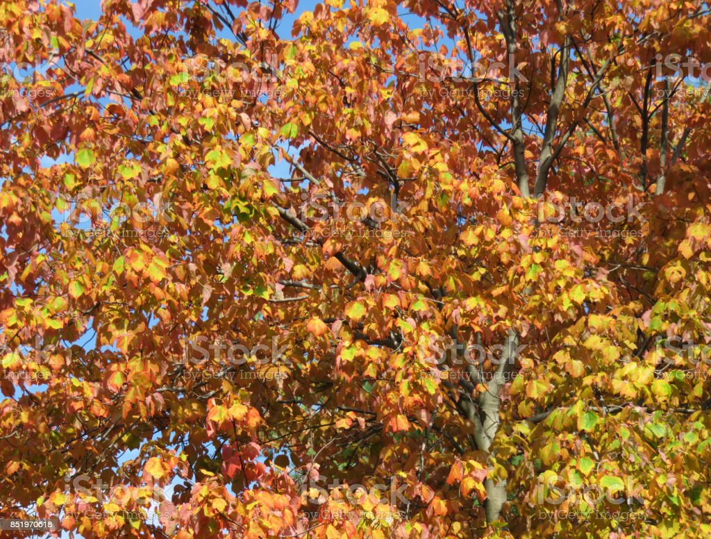 Summer Autumn stock photo