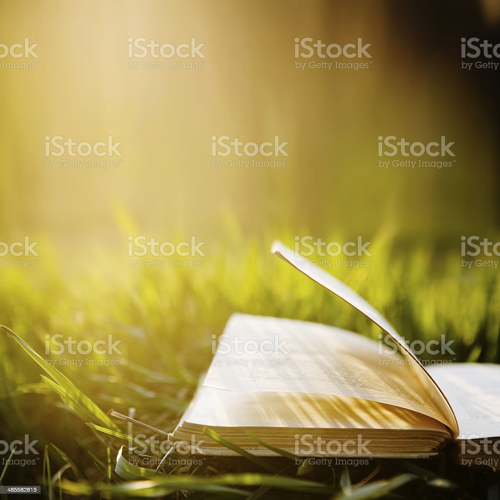 Summer backgound with open book stock photo