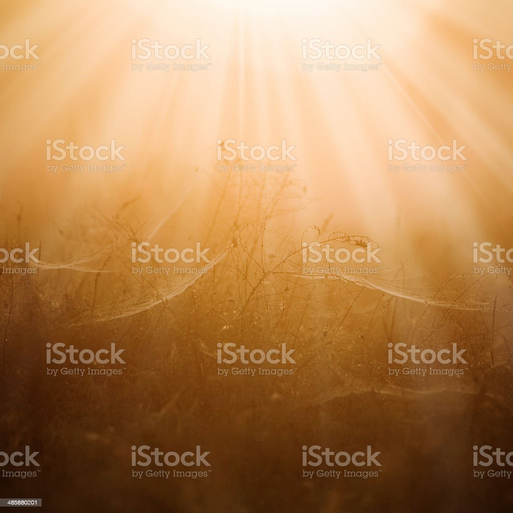 Summer background with spider web royalty-free stock photo
