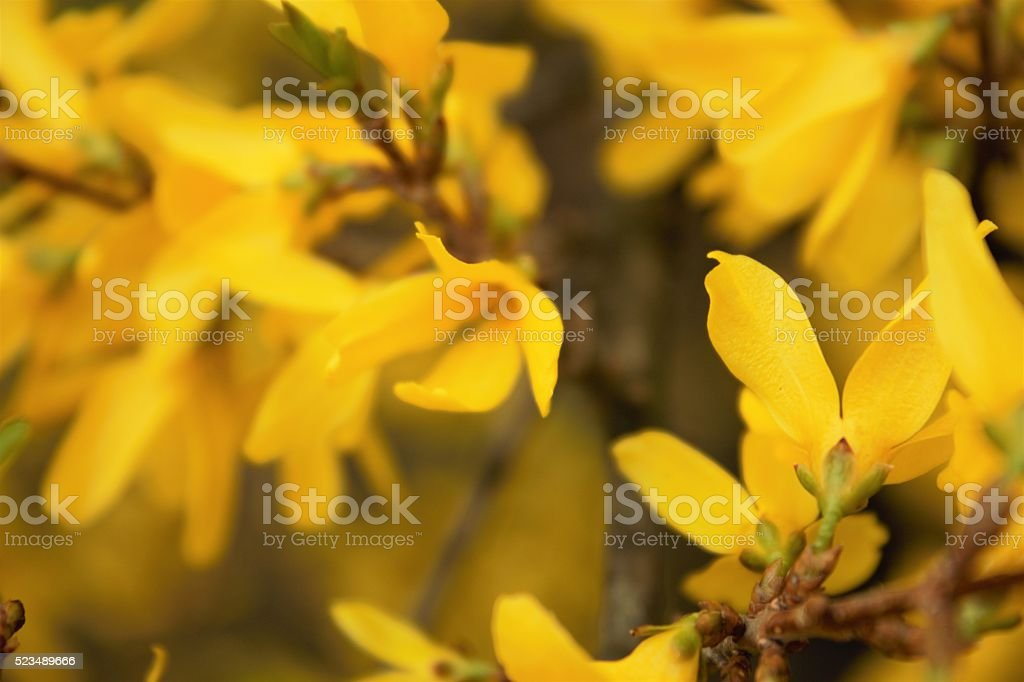 Summer Background. Yellow Flowers stock photo