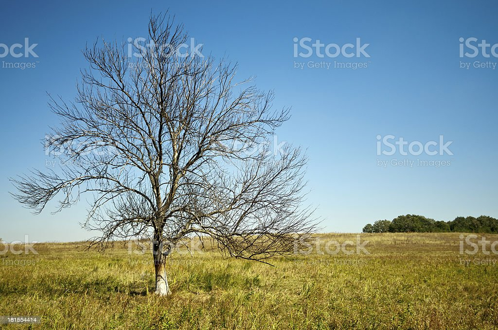 Summer bare tree horizontal royalty-free stock photo