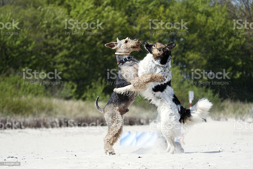 Summer beach fun for dogs royalty-free stock photo