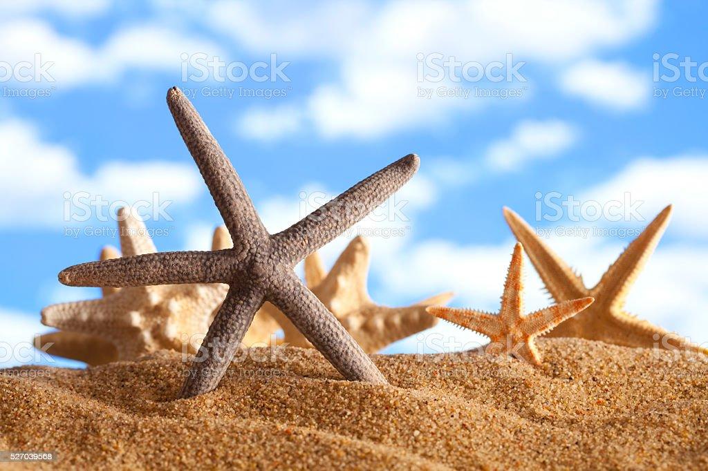Summer beach - starfishes in sand stock photo