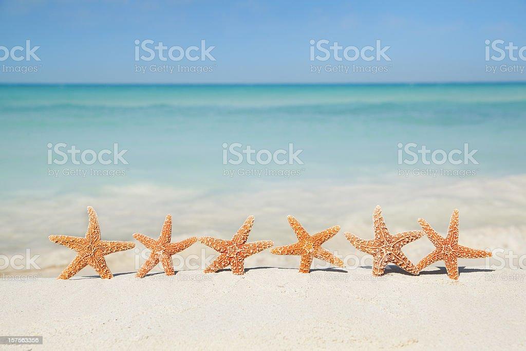 Summer Beach Vacation Holiday, Seashells Starfishes Party on Sand stock photo