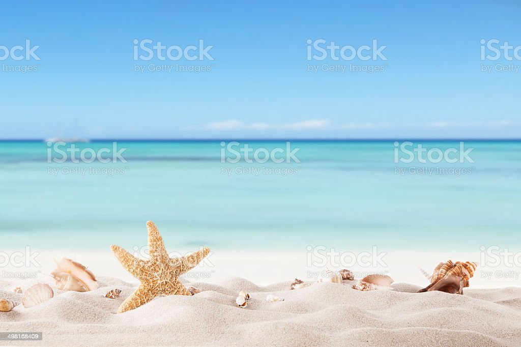 Summer beach with strafish and shells stock photo