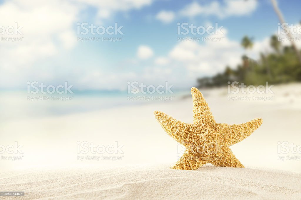 Summer beach with strafish stock photo
