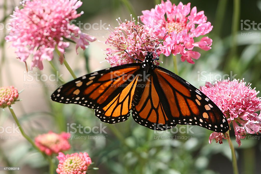 summer butterfly royalty-free stock photo