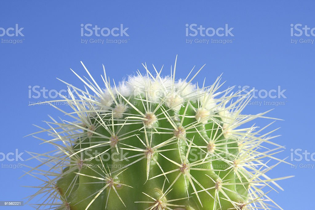 Summer Cactus royalty-free stock photo