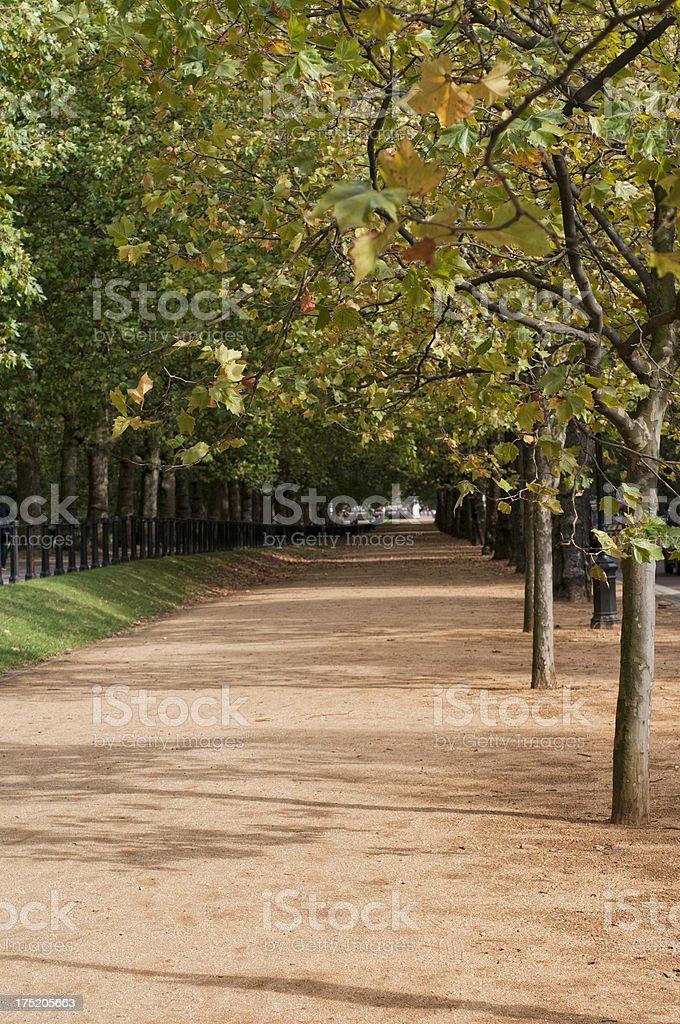 Summer city park royalty-free stock photo