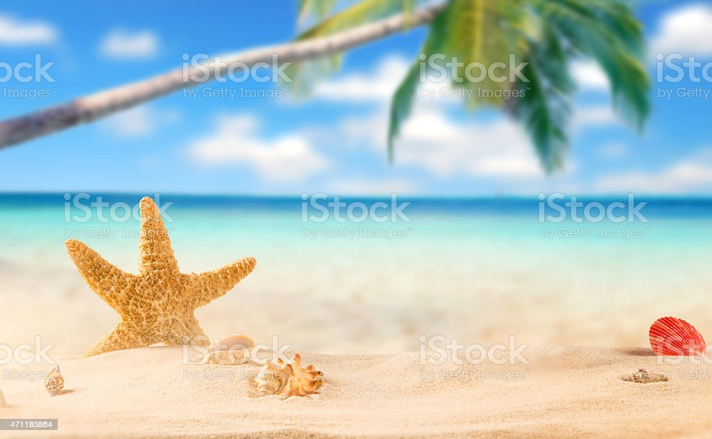 summer coconut drink on the beach stock photo