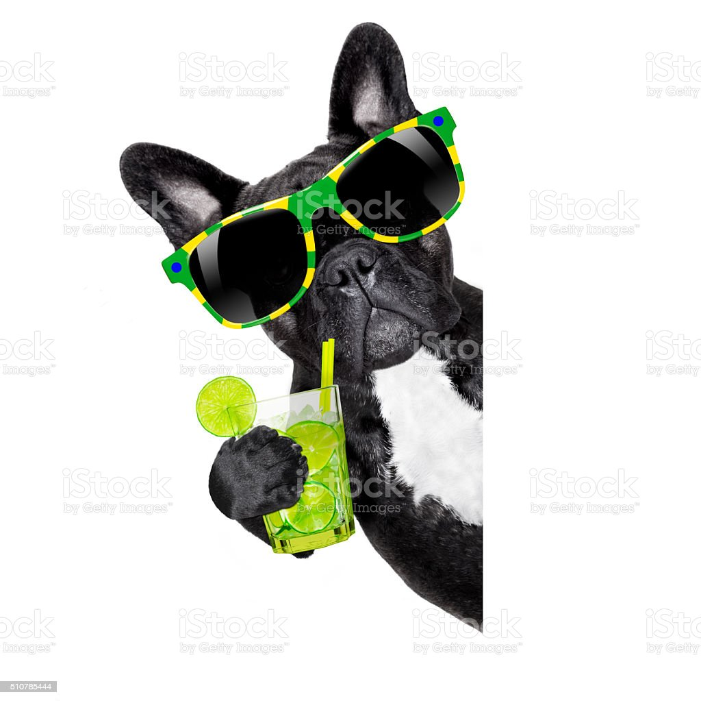 summer cokctail dog stock photo