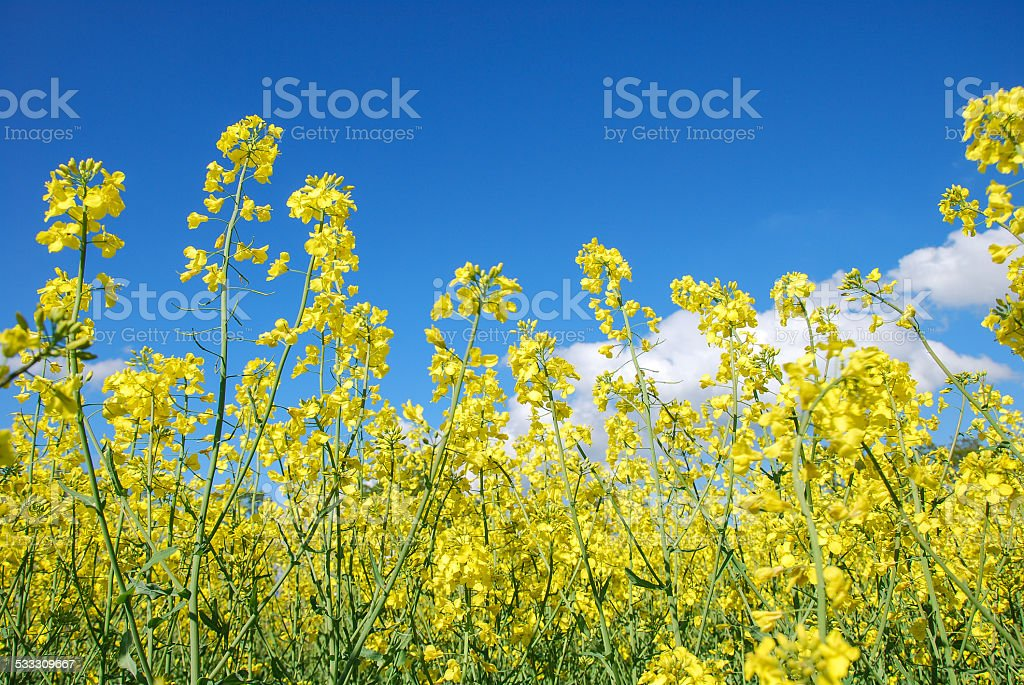 Summer colors stock photo