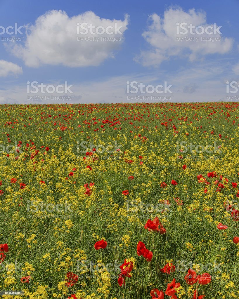 summer colour royalty-free stock photo