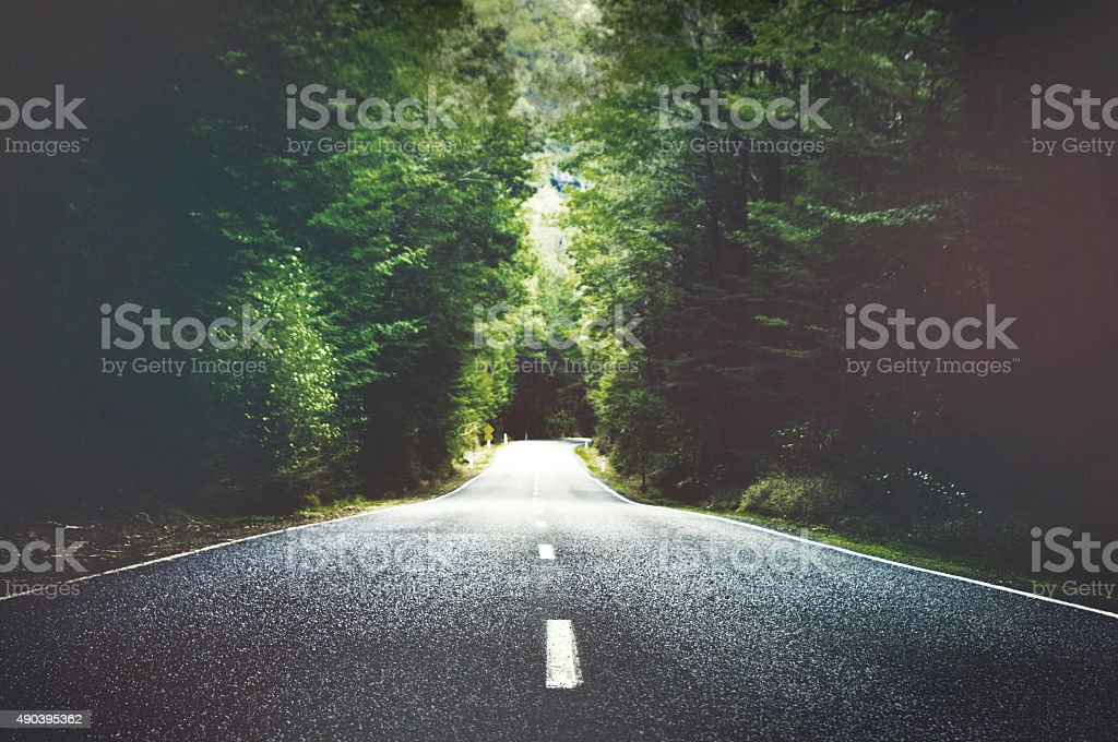 Summer Country Road With Trees Beside Concept stock photo