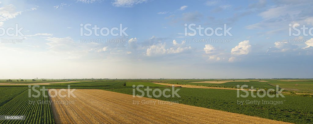Summer crops panorama royalty-free stock photo