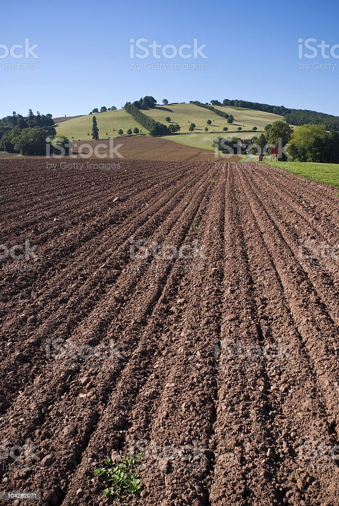 Summer crops stock photo