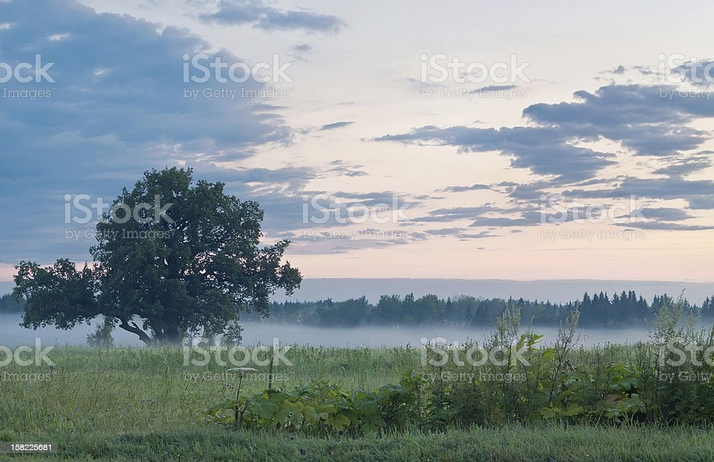 Summer dawn royalty-free stock photo