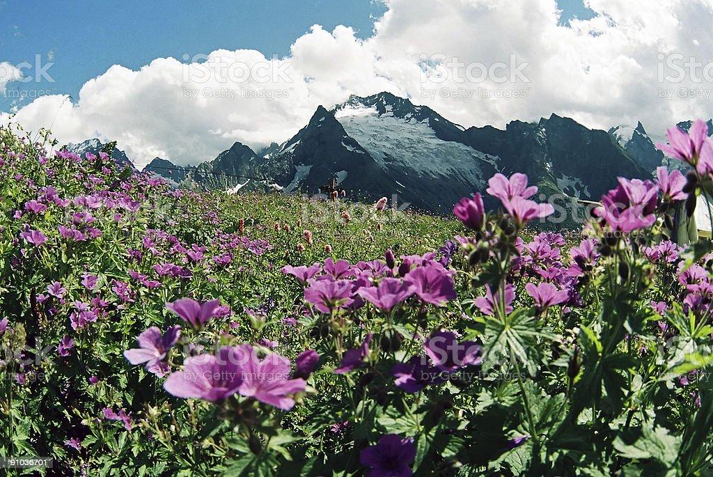 Summer day.Dombai. royalty-free stock photo