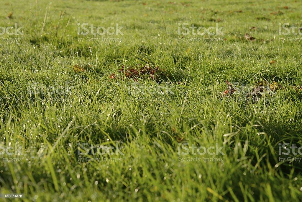 Summer dew royalty-free stock photo