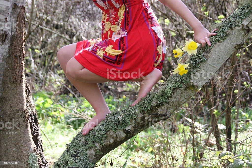 Summer Dress Spring Daffodils stock photo